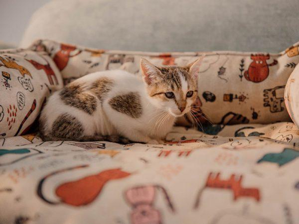 Tienda Reyes ordonez cama gatos